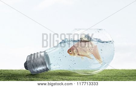 Golden fish in bulb