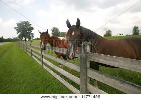 Fence Buddies
