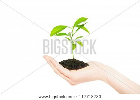 Human hands holding green small plant new life concept