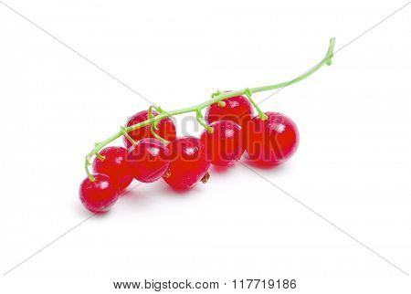 red currants on a white background