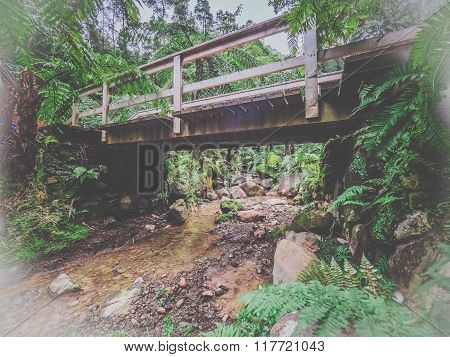 Bridge in the tropical forest