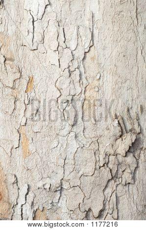 Platan Bark Texture