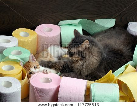 Cats play among colorful rolls of toilet  paper