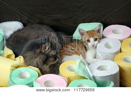Cats and a lot of toilet paper