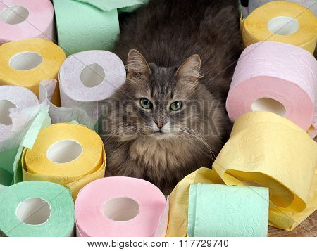 Cat and a lot of toilet paper.