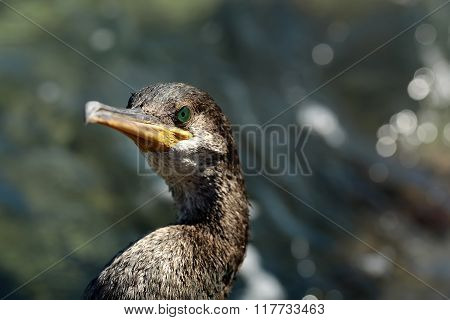 Portrait Of Wild Sea Bird