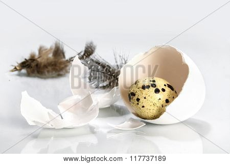 Little Quail Egg In A Chicken Eggshell And Feathers On Light Gray, Easter Concept Or Metaphor