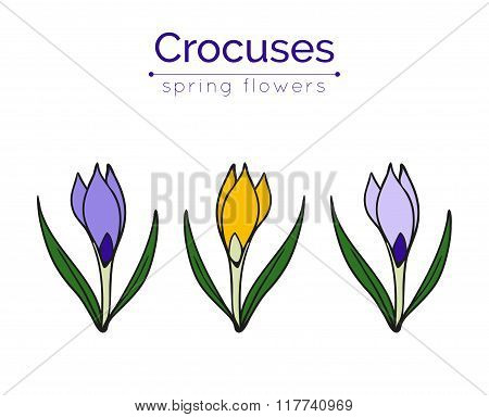 Set of vector crocuses.