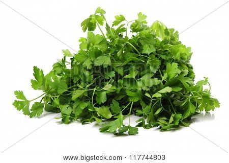 Bunch of parsley on a white background
