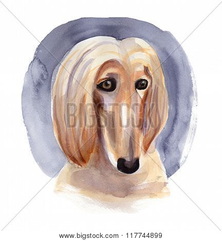 Afghan hound drawn by watercolor.