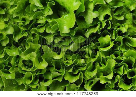 Healthy food. Green salad in close-up