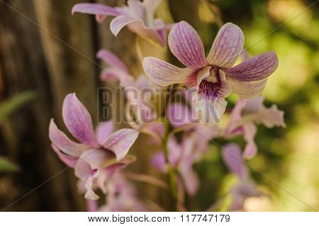 Branch Of White Moth Orchid