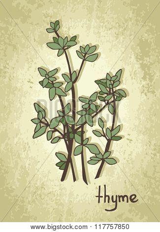 Hand drawn thyme cartoon vector.