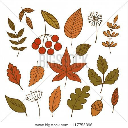 Collection of different autumn leaves