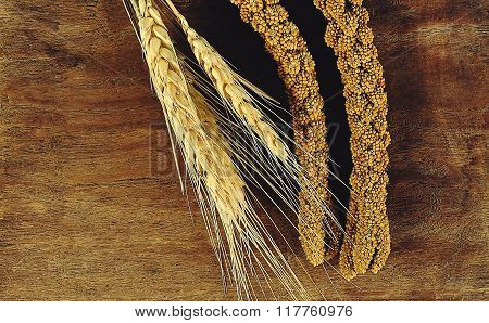 Ear of rice barley on wood background