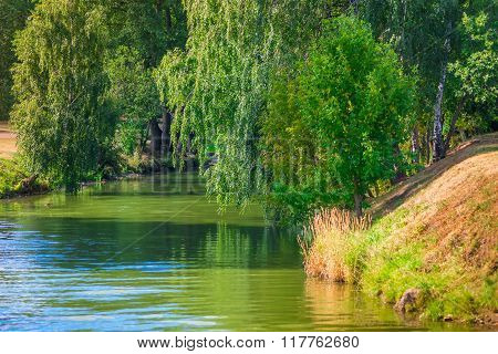 Narrow River And Hanging Green Trees On A Sunny Day