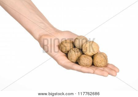 Nuts And Meal Preparation Topic: Human Hand Holding Walnuts In Shell Isolated On White Background In