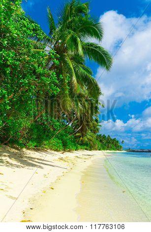 Palms Sea Panorama