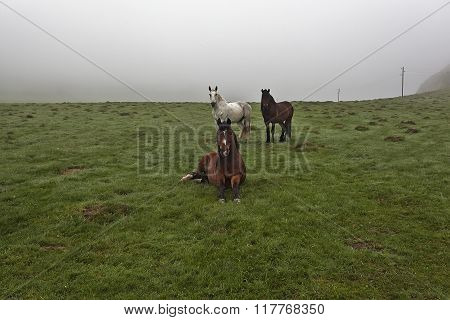 Horses On A Green Meadow 8