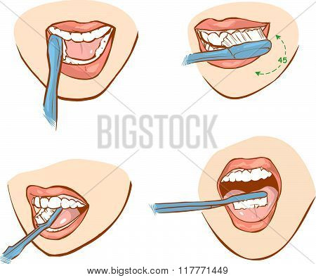 White Backround Vector Illustration Of A Tooth Brushing