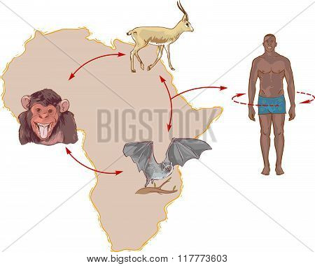 Illustration Ebola Virus Circulation In Nature And The Way Of Transmission To Humans