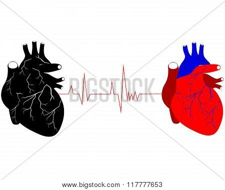 Two Human Hearts