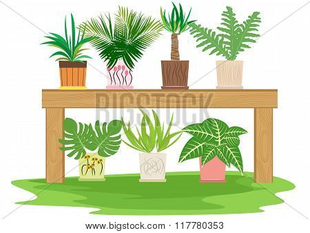 gardening table with potted herbs