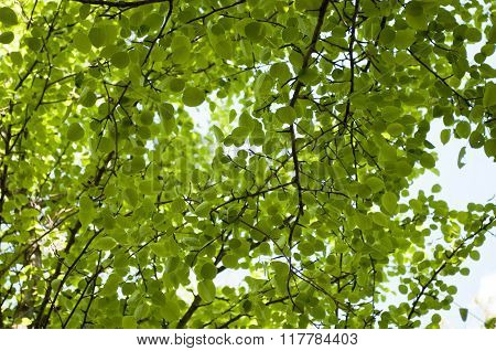 View From Below On Green Forest.