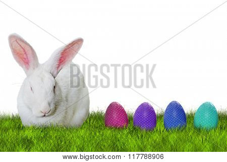 Bunny and Easter eggs on grass on white background for Easter hunting