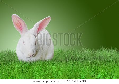 Easter rabbit on grass on green background