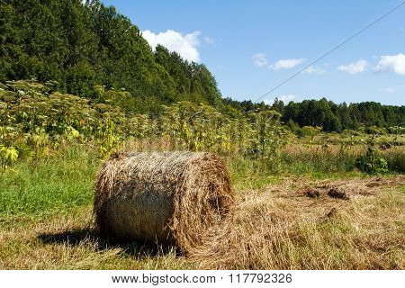 Landscape rural with haystacks in the field.
