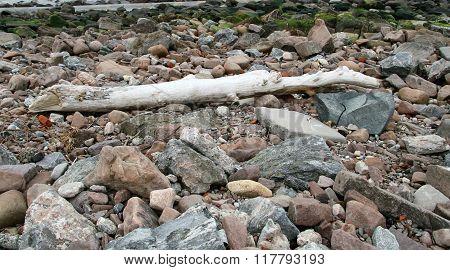 Dead tree trunk on beach