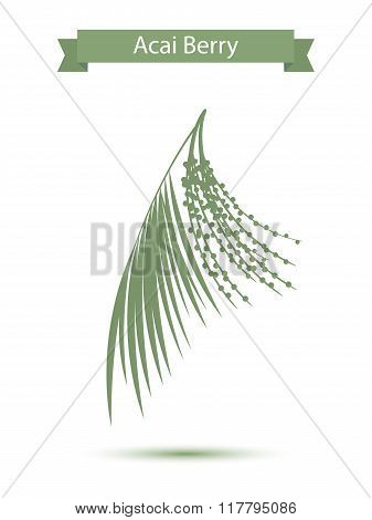 Acai palm leaves and acai berries vector illustration isolated on white background. Superfood acai g