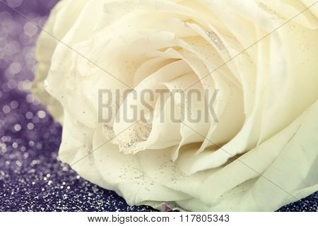 Valentines background - White rose on sparkling glitter background
