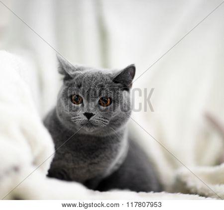 Cat lying on warm plaid indoors