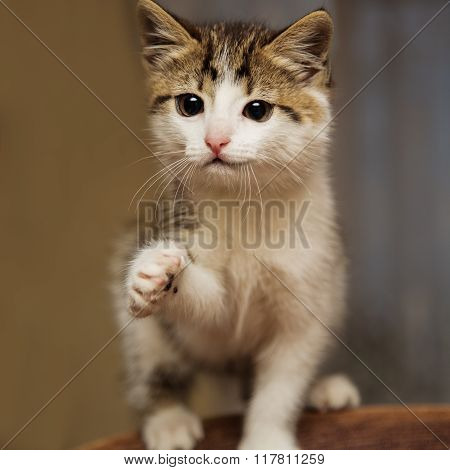 Cute smiling kitten stretches a paw say hello