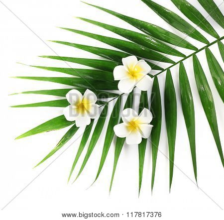 Plumeria flowers and palm leaves, closeup