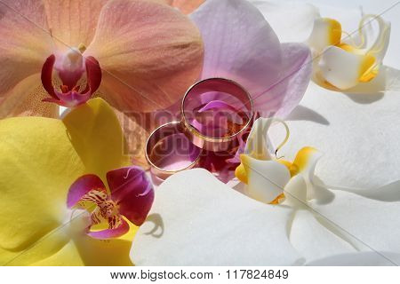 Two Pretty Rings On Orchids