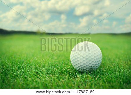 Golf ball on golf course.