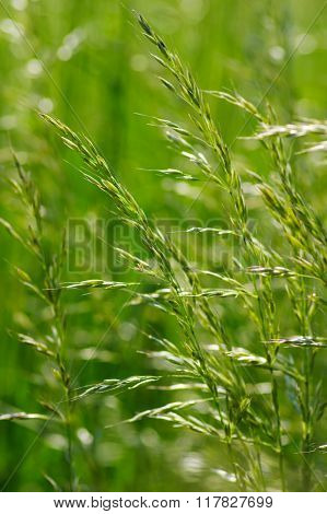 Summer flowering grass and green plants