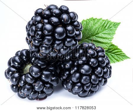 Three blackberries on the white background.