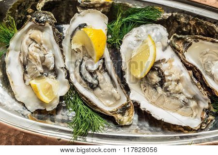 Opened oysters with piece of lemon on the cooper tray.
