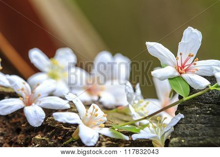 Fallen Tung Flowers With Nice Background Color