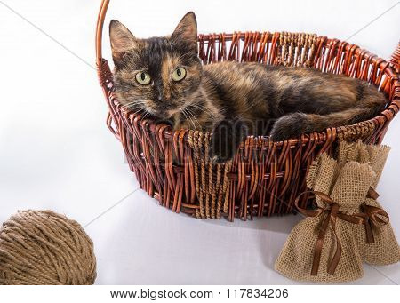 The cat is lying in a basket