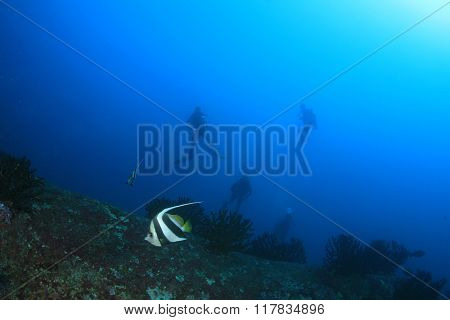 Tropical fish and scuba divers