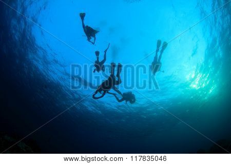 Scuba divers and shoal of barracuda fish