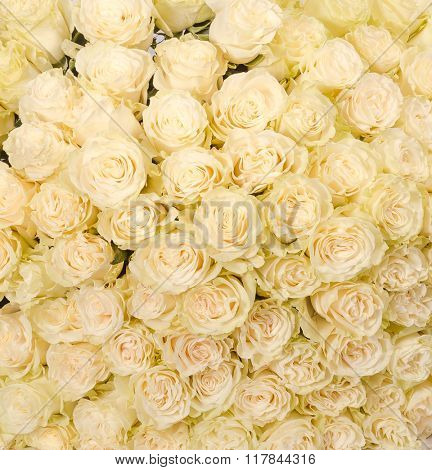 huge bouquet of white roses