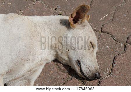 Homeless Stray Dog.
