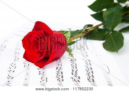 Rose And Music Sheets