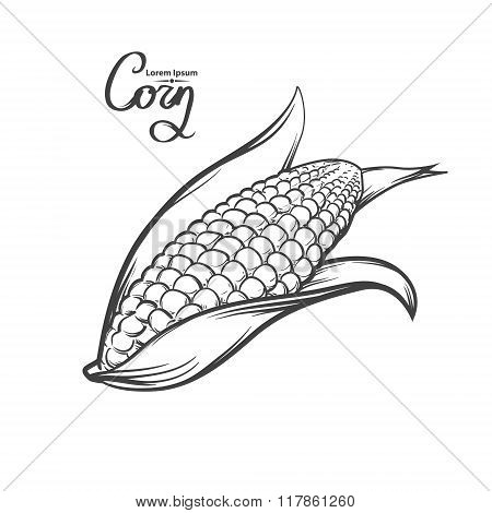 Corn Image Food